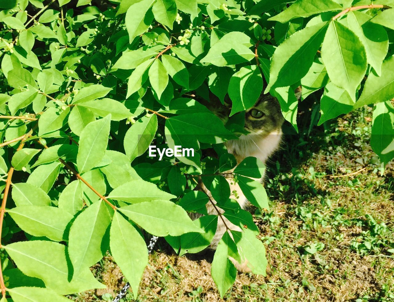 High angle view of cat hiding in plants