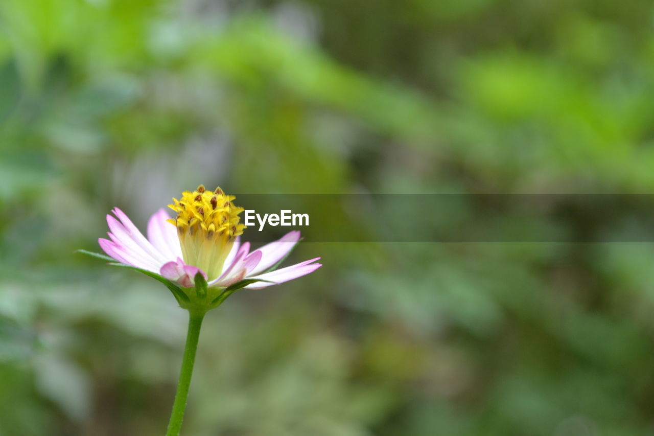 flower, petal, fragility, beauty in nature, nature, flower head, freshness, growth, plant, blooming, focus on foreground, close-up, day, outdoors, no people, yellow