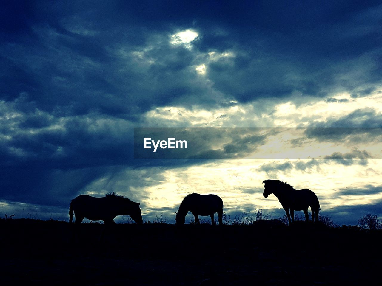 Silhouette Of Horse On Field Against Cloudy Sky