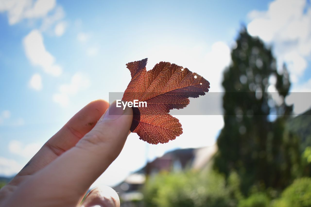 Cropped Image Of Hand Holding Leaf With Tree In Background
