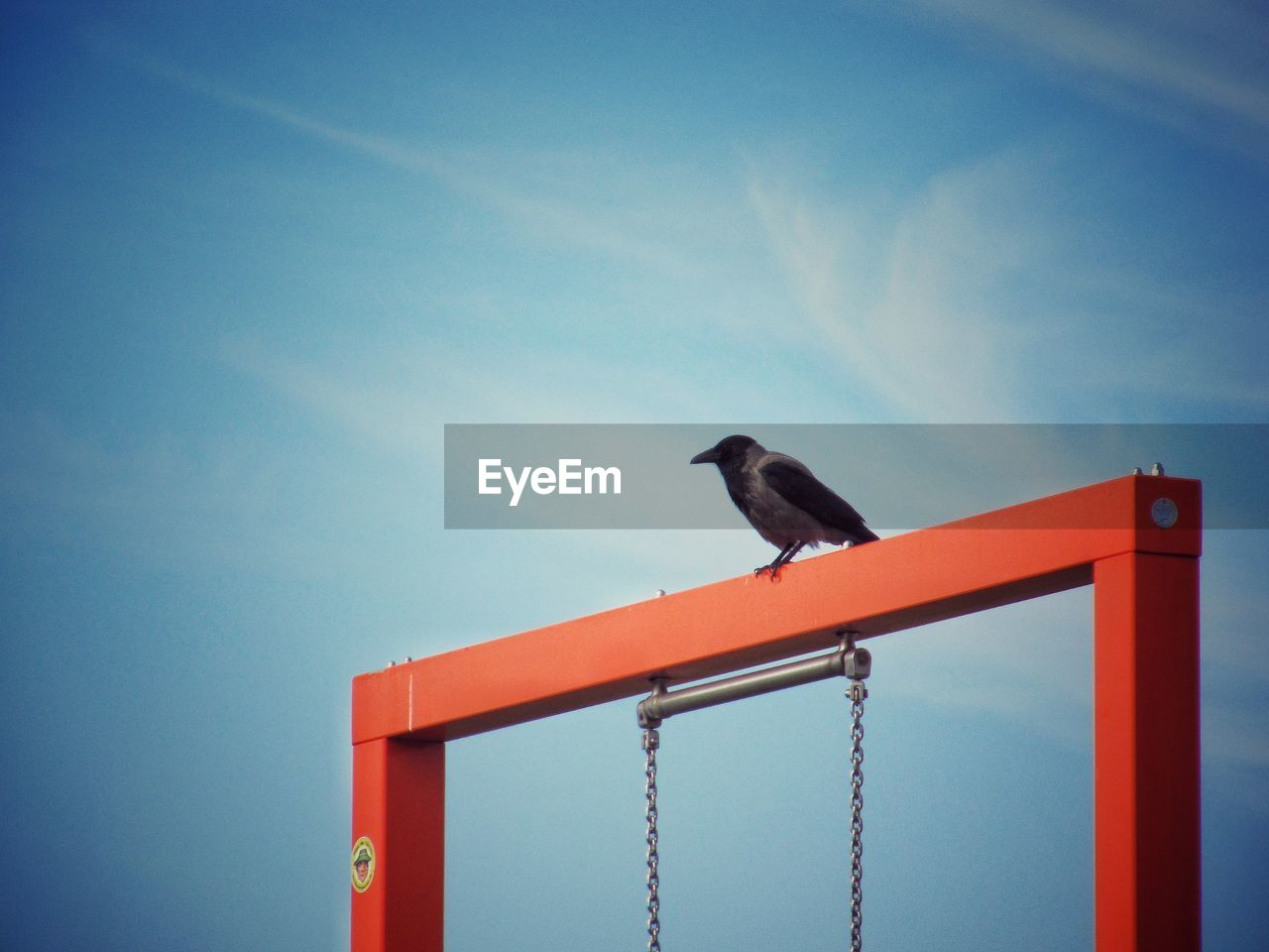 one animal, perching, animal themes, bird, animals in the wild, low angle view, no people, animal wildlife, day, outdoors, sky, nature