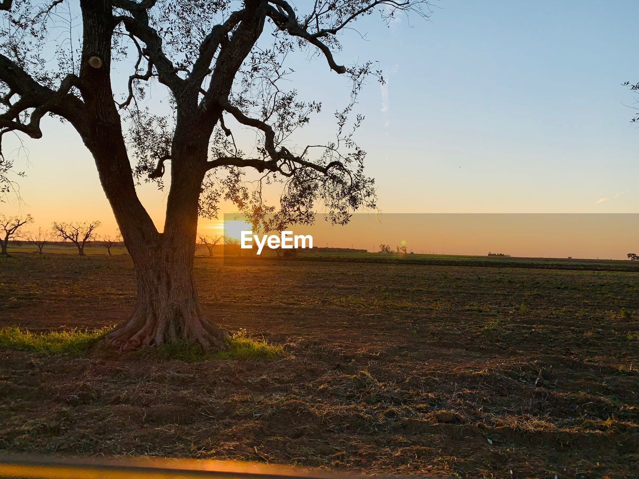 sky, sunset, tree, plant, tranquility, beauty in nature, scenics - nature, tranquil scene, environment, field, landscape, land, nature, sun, non-urban scene, no people, sunlight, orange color, idyllic, growth, outdoors, lens flare