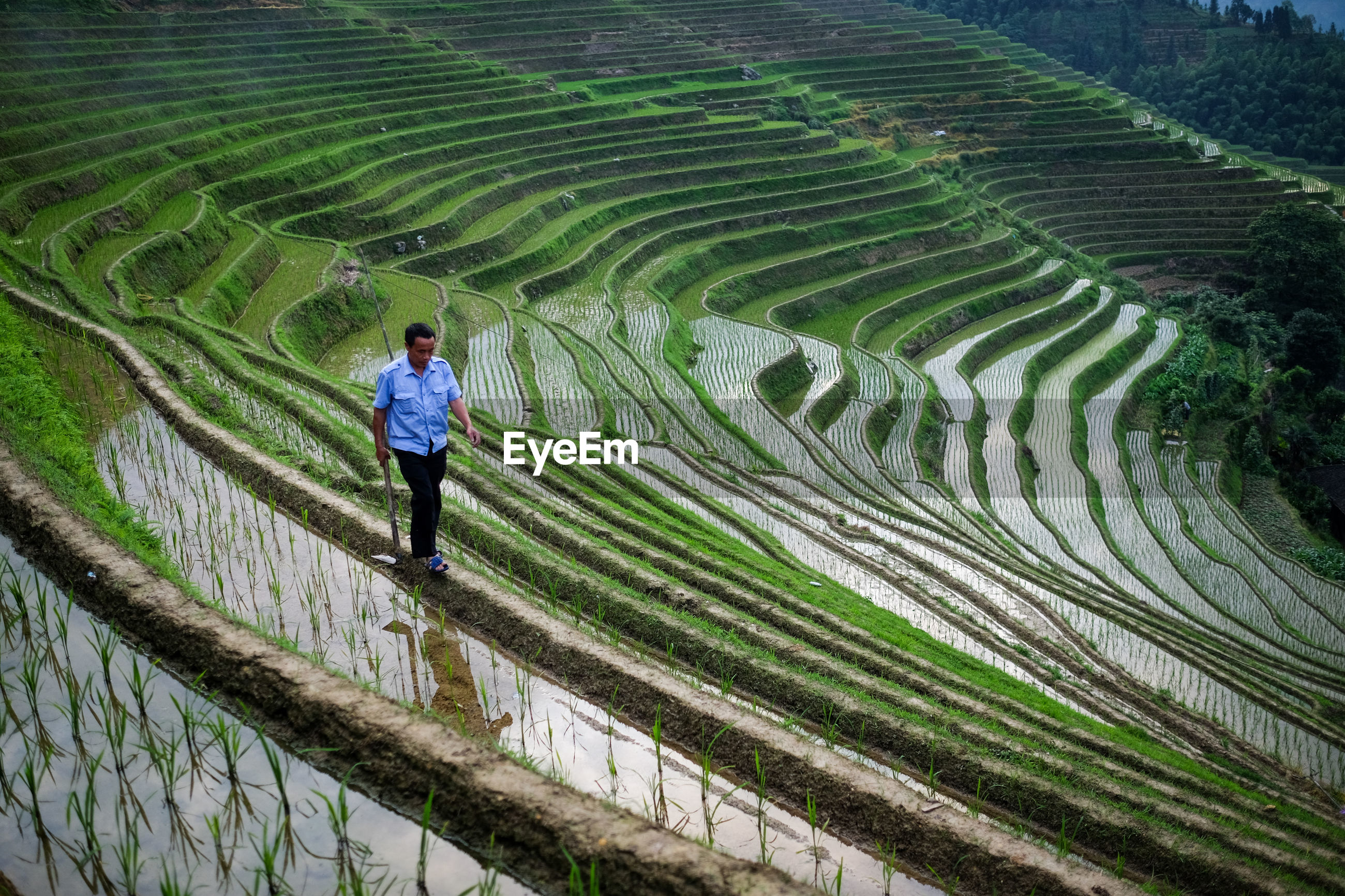 HIGH ANGLE VIEW OF PERSON WALKING ON FARM