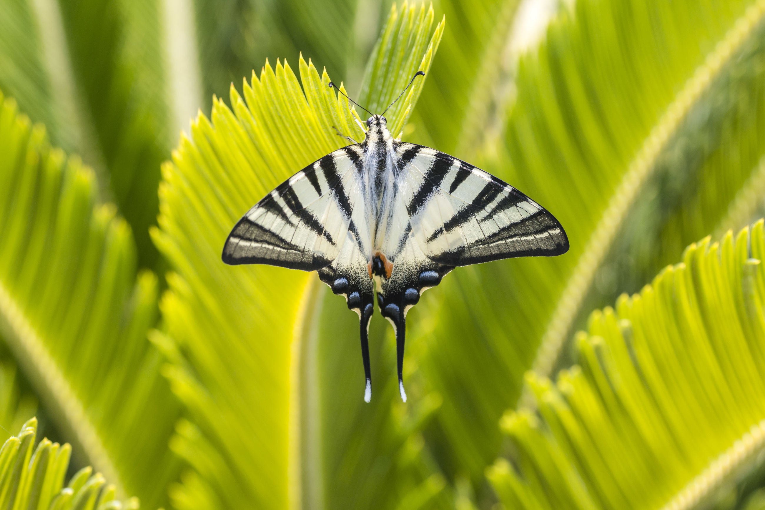 animal themes, one animal, insect, animals in the wild, leaf, green color, butterfly - insect, animal wildlife, nature, butterfly, no people, close-up, day, growth, plant, outdoors, beauty in nature, fragility, spread wings, freshness