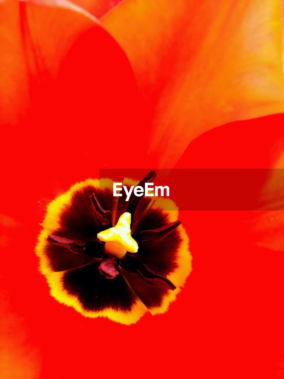 flower, petal, flower head, fragility, red, beauty in nature, nature, freshness, growth, no people, close-up, outdoors, day