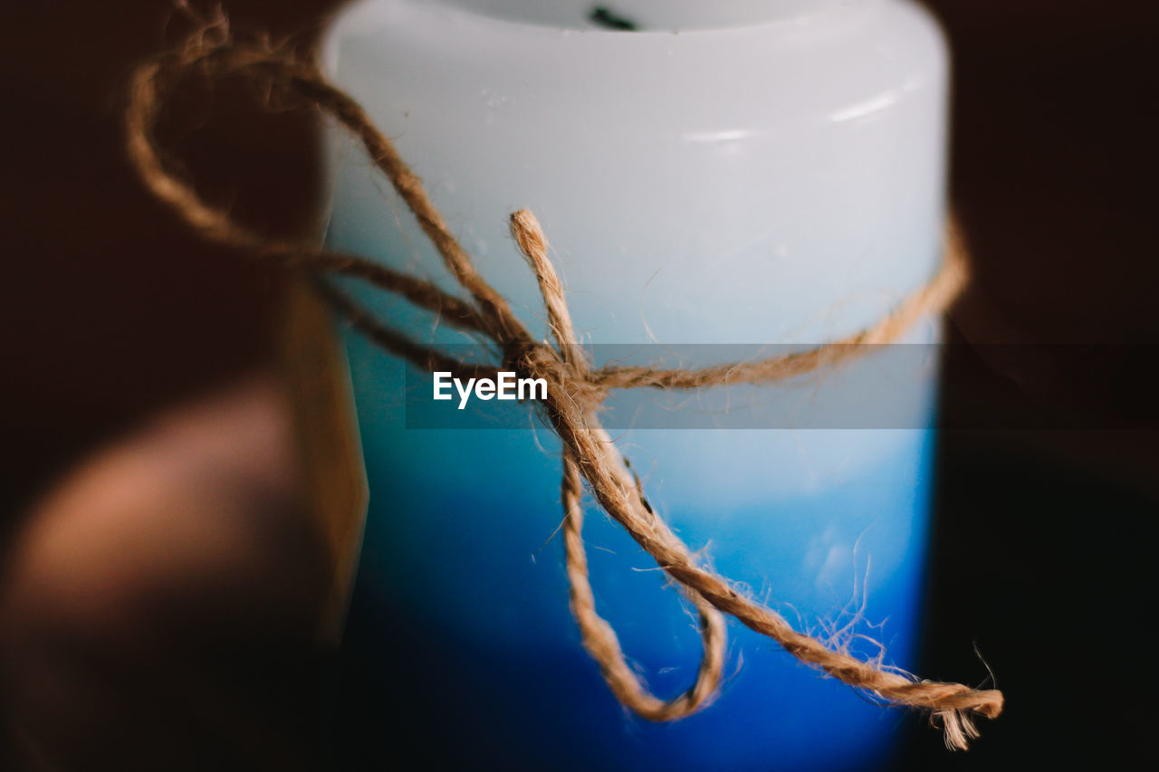 selective focus, close-up, indoors, blue, tied up, nature, no people, plant, rope, container, still life, tree, high angle view, animal themes, animal wildlife, animal, jar, wood - material, water
