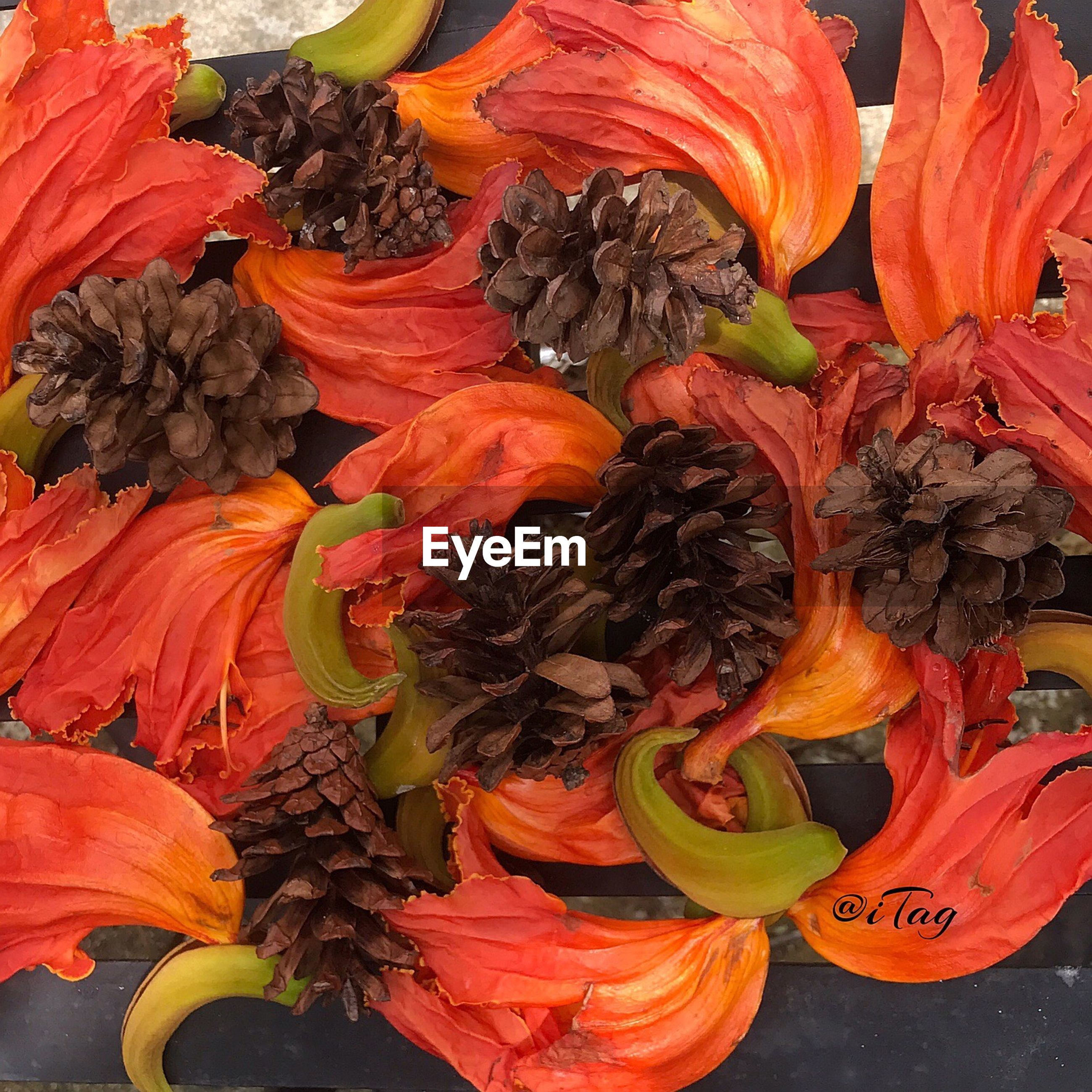 orange color, flower, full frame, retail, backgrounds, fragility, freshness, no people, for sale, petal, flower head, multi colored, variation, day, flower market, beauty in nature, close-up, outdoors, nature