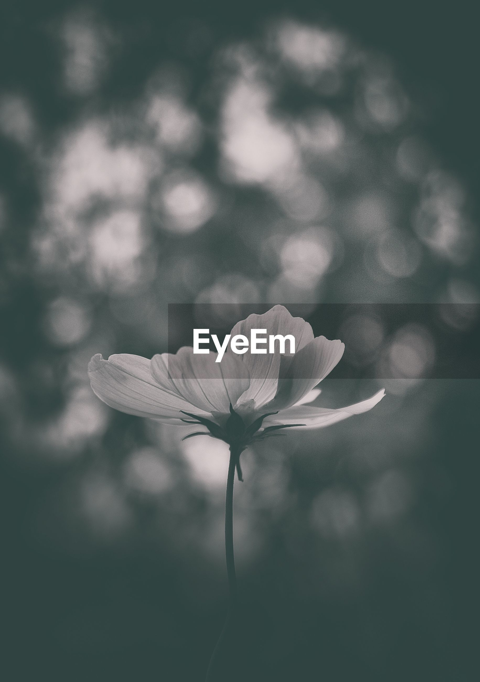 nature, growth, fragility, close-up, beauty in nature, focus on foreground, flower, no people, plant, freshness, outdoors, day, flower head, tree, sky