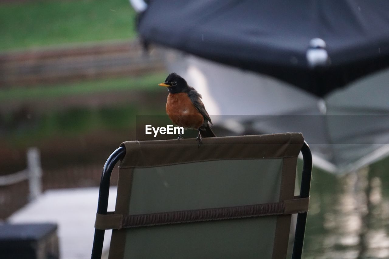 animal themes, bird, animal, one animal, vertebrate, animals in the wild, animal wildlife, perching, focus on foreground, robin, day, no people, nature, outdoors, close-up, selective focus, railing, orange color, wood - material, seat