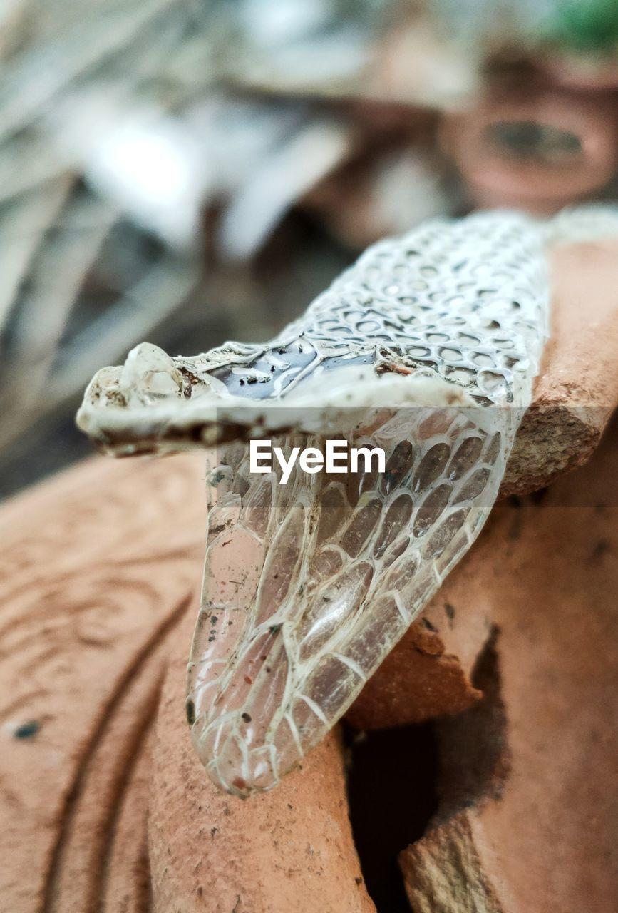 Close-up of a snake molt.
