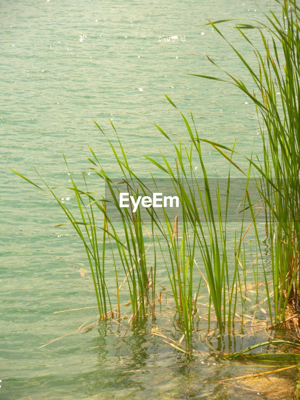water, lake, nature, growth, grass, plant, green color, no people, outdoors, tranquility, beauty in nature, beginnings, day, environment, direction, freedom, swamp