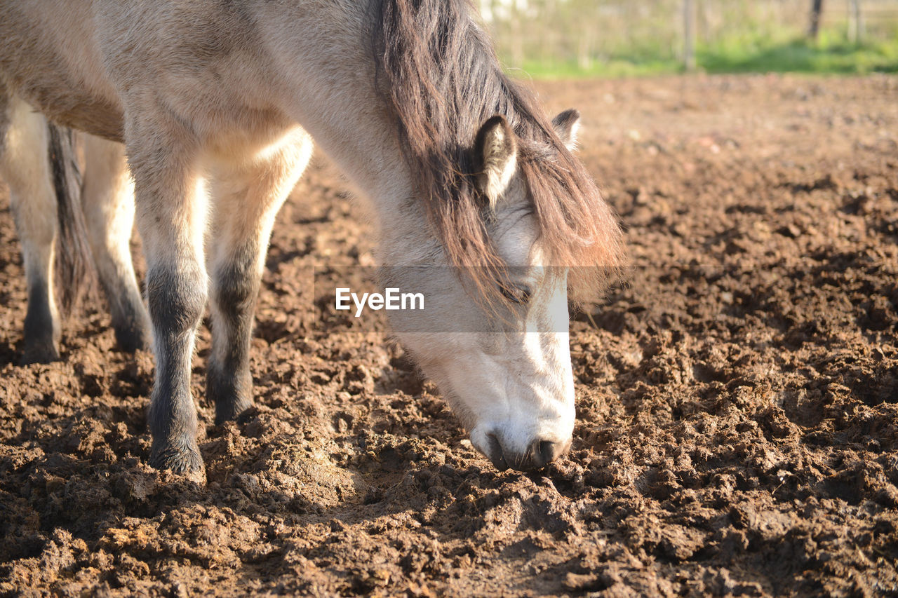 Pony On A Ploughed Field