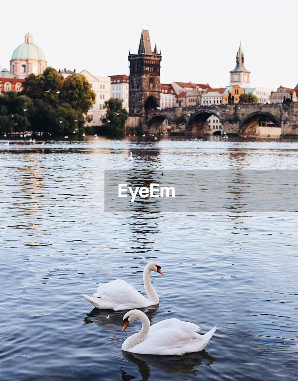 water, bird, architecture, swan, lake, animal themes, animals in the wild, day, swimming, outdoors, waterfront, travel destinations, built structure, nature, no people, sky