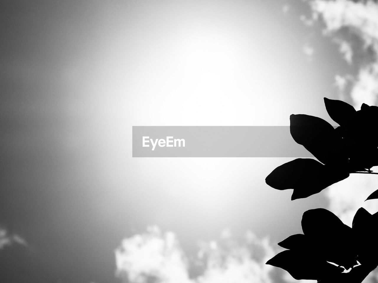 sky, silhouette, nature, low angle view, outdoors, beauty in nature, sun, no people, day, close-up, tree