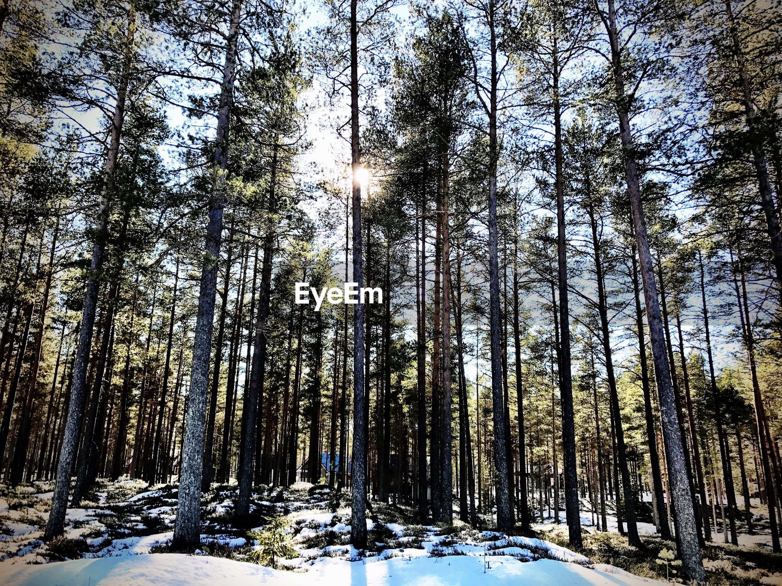 LOW ANGLE VIEW OF TREES IN WINTER