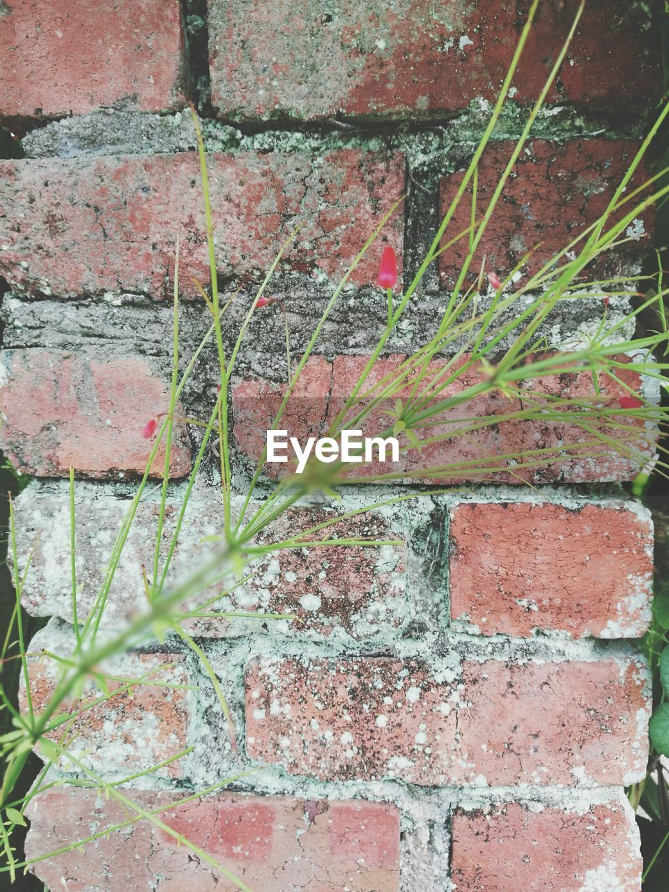 brick wall, day, outdoors, no people, built structure, plant, leaf, architecture, full frame, growth, backgrounds, close-up, nature