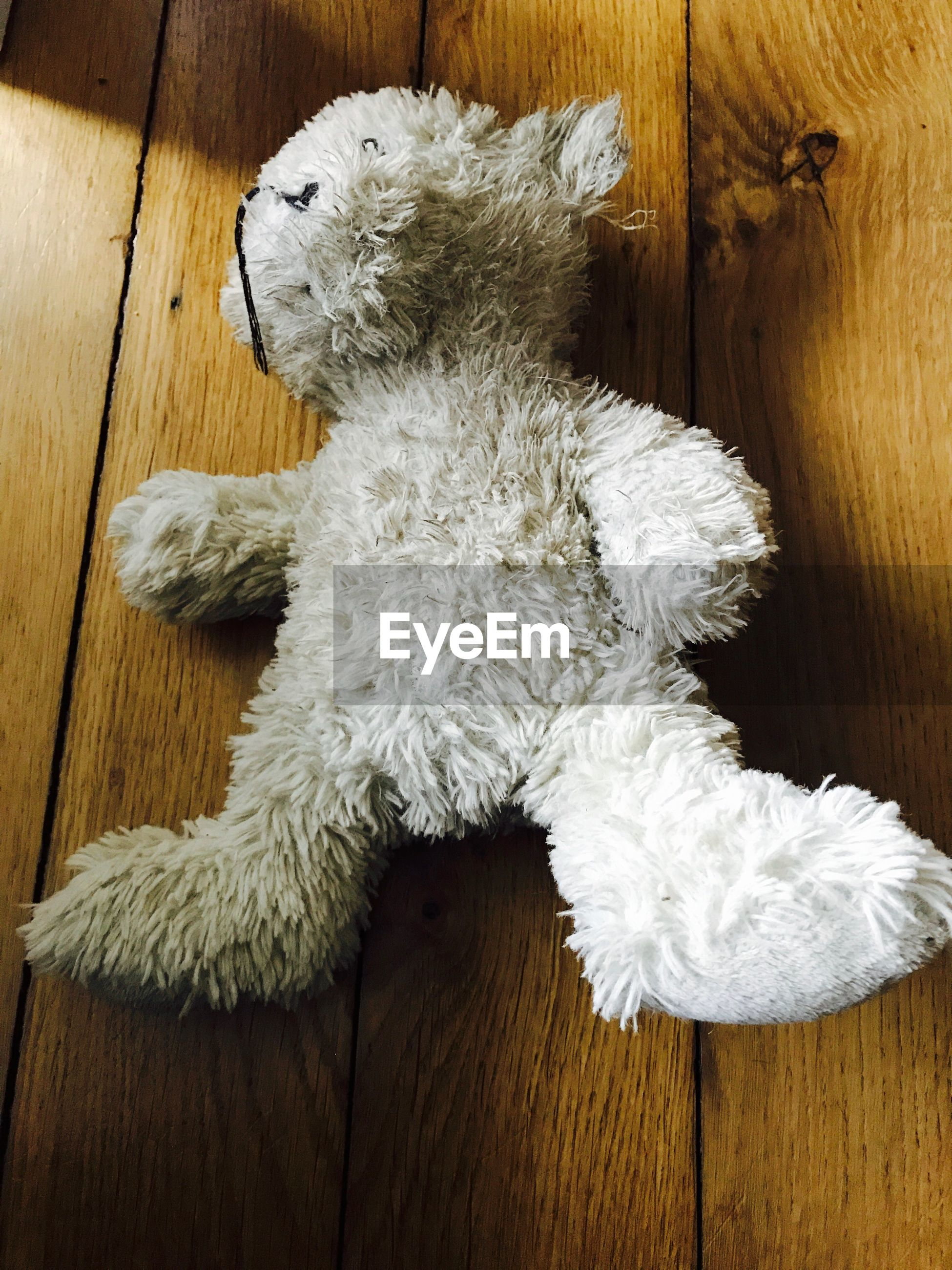 High angle view of white teddy bear on hardwood floor