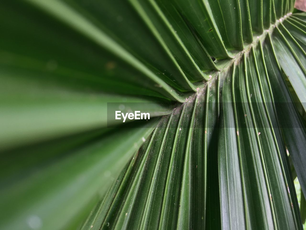 DETAIL SHOT OF PALM LEAVES