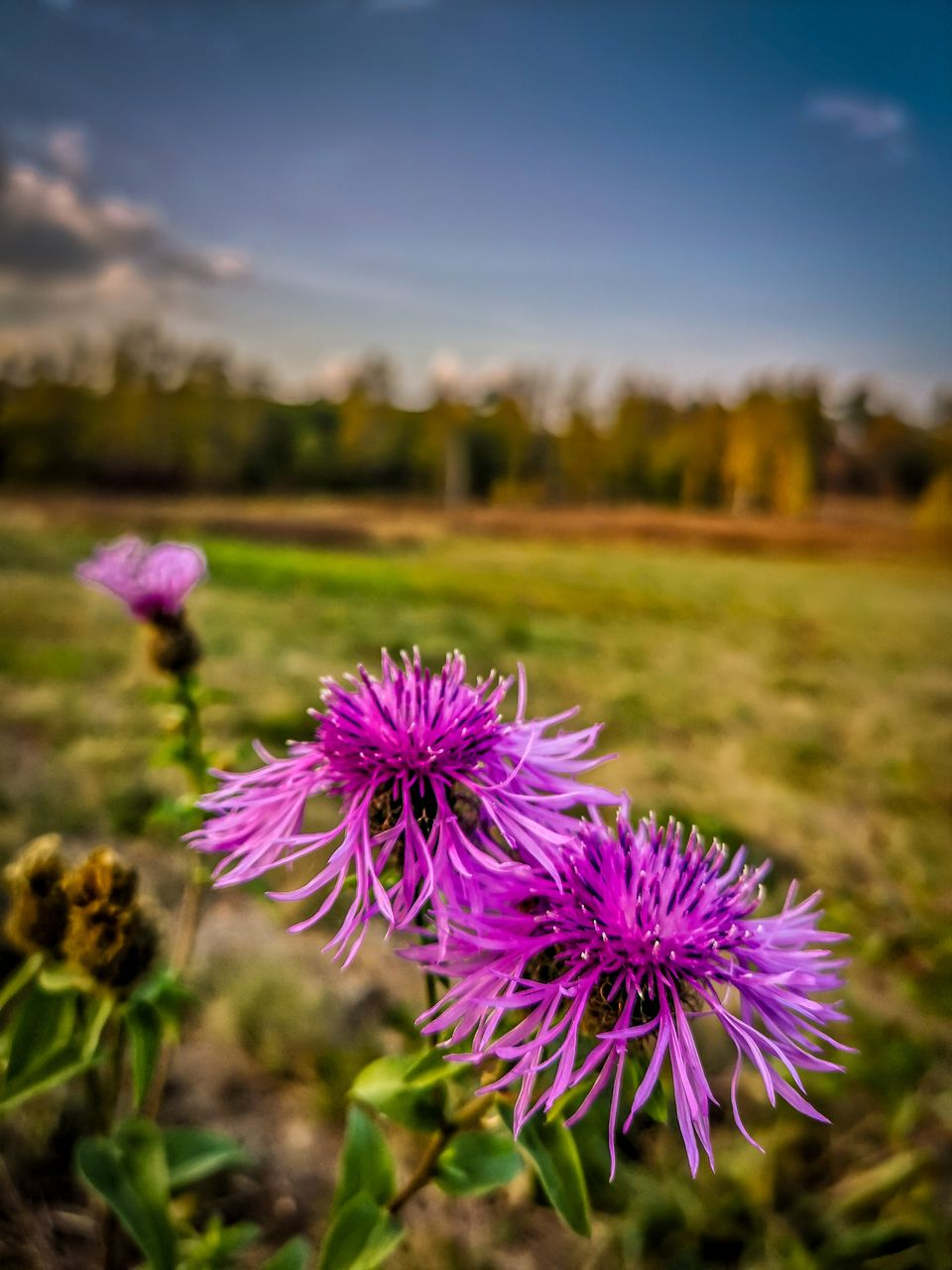 Mal ein bisschen Farbe in den grauen Alltag bringen. Wünsche eich eine gute Nacht und ein entspannten Dienstag 😊🌃 Autumn Autumn colors Flower Head Sky Scenics Scenics - Nature Nature_collection Tranquil Scene Beauty In Nature Tranquility Tree Nature Day Outdoors Landscape Harzlandschaft Flower Head Flower Thistle Flowerbed Summer Crocus Rural Scene Purple Field Springtime In Bloom Wildflower Coneflower Pollen Market Trends: Winter Food My Best Photo Market Trends: Winter Food Picture Your Community Market Trend: Shopping & Quick Payments Market Trends: Grandmothers & Grandfathers Picture The Decade Market Trends: Pregnancy & New Borns Picture The Decade