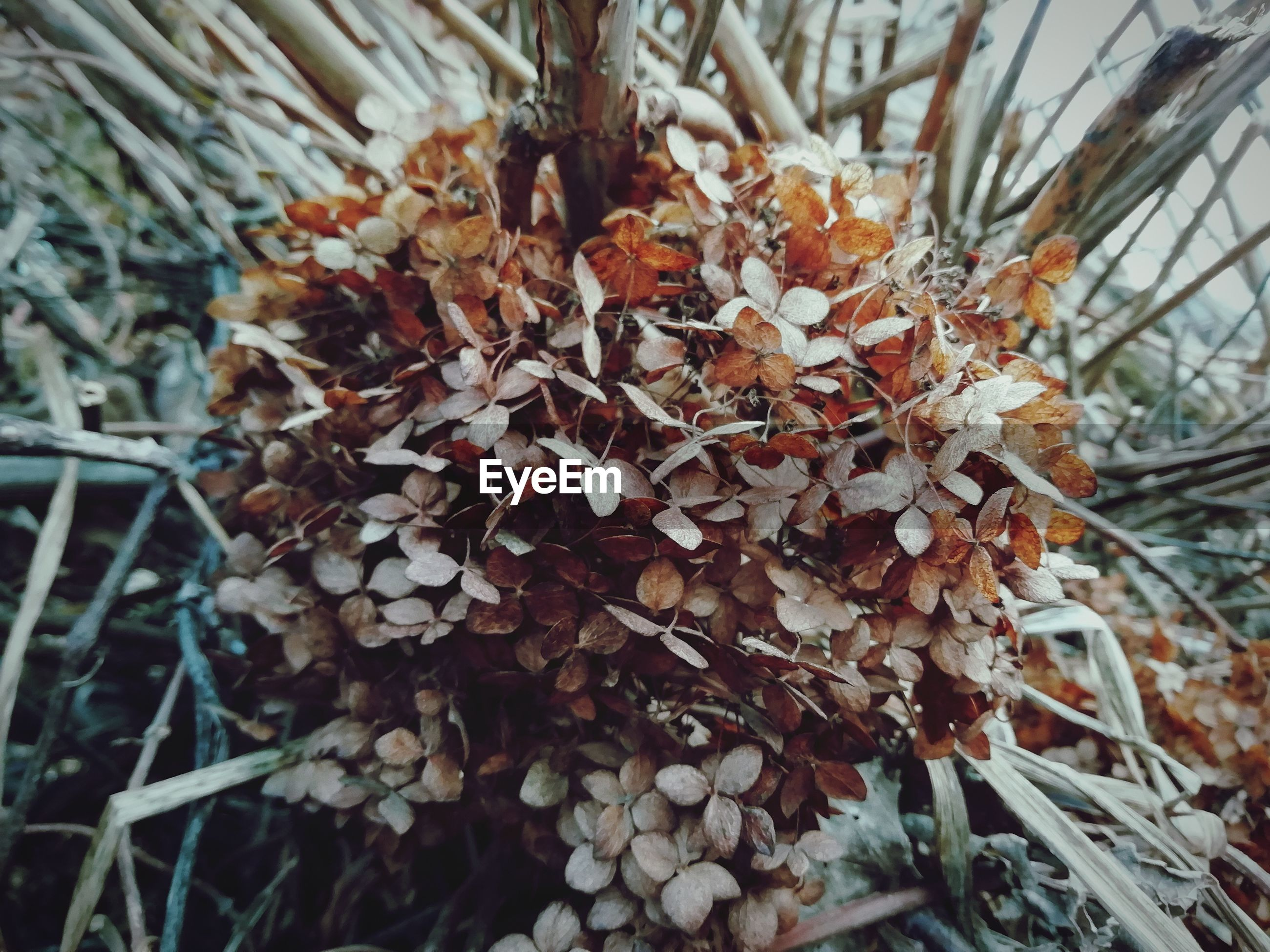 plant, growth, plant part, leaf, tree, nature, day, beauty in nature, close-up, no people, focus on foreground, outdoors, dry, branch, selective focus, autumn, change, tranquility, vulnerability, fragility, leaves, coniferous tree