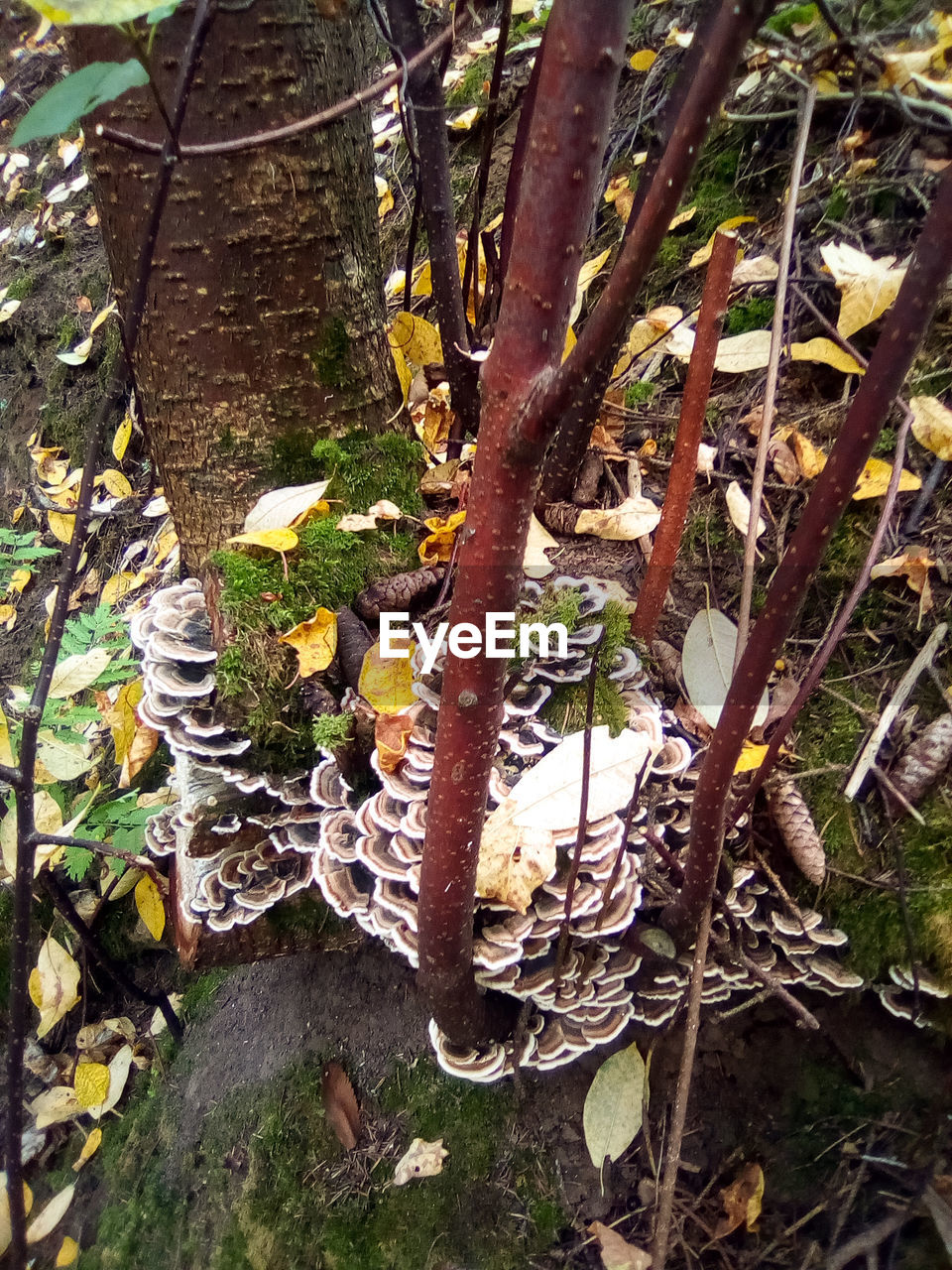 plant, tree, growth, nature, tree trunk, no people, trunk, day, land, forest, plant part, leaf, outdoors, branch, high angle view, tranquility, close-up, beauty in nature, fungus, mushroom, bark, lichen