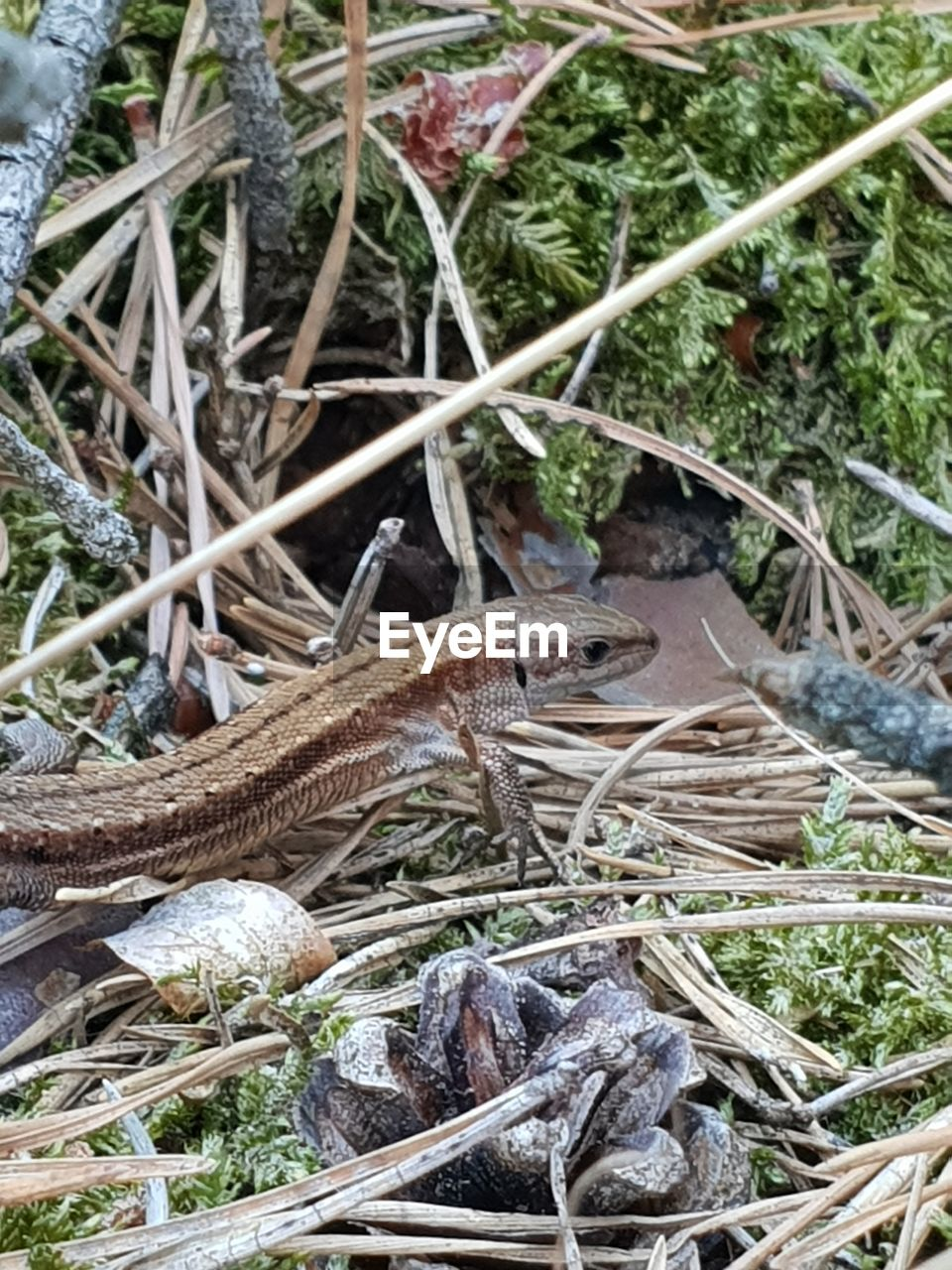animal wildlife, animal, animal themes, one animal, animals in the wild, vertebrate, reptile, plant, high angle view, nature, no people, day, lizard, grass, close-up, land, focus on foreground, field, outdoors, invertebrate, stick - plant part, animal scale