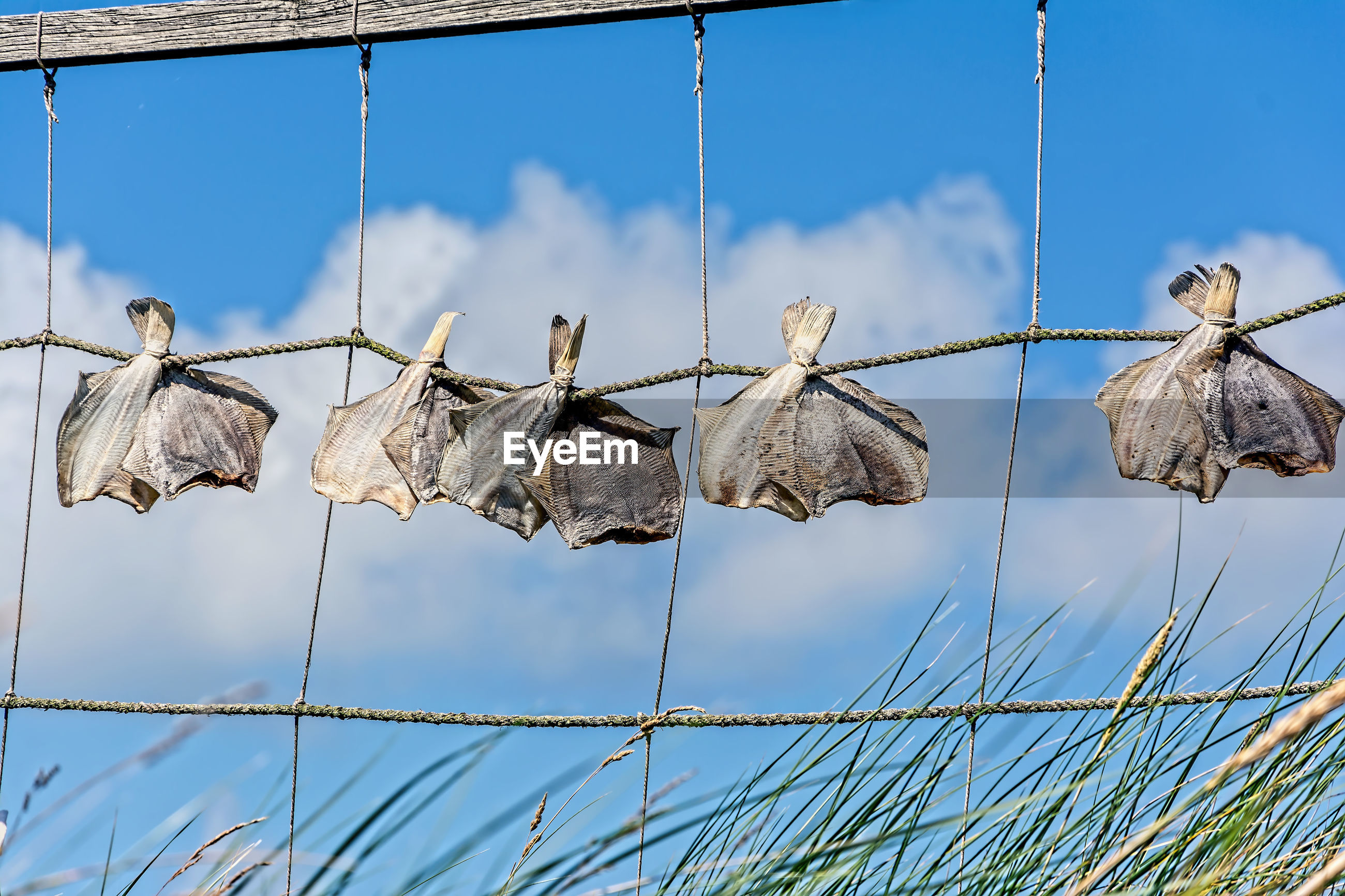 Low angle view of fishes drying on fence against sky