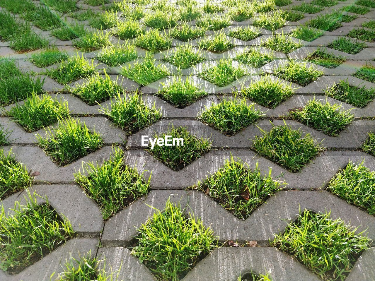 High Angle View Of Grass Growing On Concrete