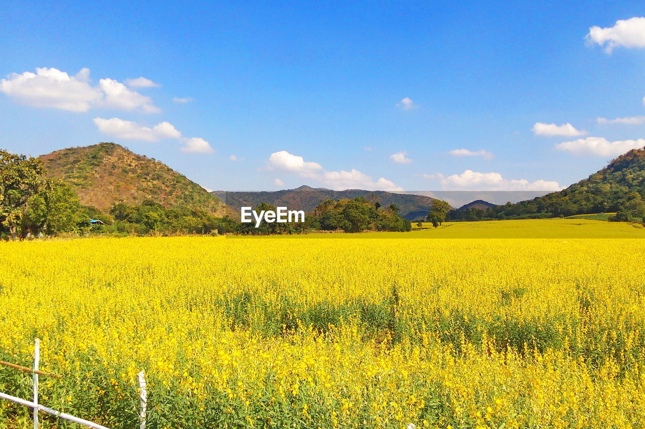 yellow, beauty in nature, scenics - nature, sky, landscape, flower, land, tranquil scene, tranquility, mountain, plant, flowering plant, field, oilseed rape, cloud - sky, growth, nature, agriculture, environment, rural scene, no people, mountain range, outdoors, flowerbed