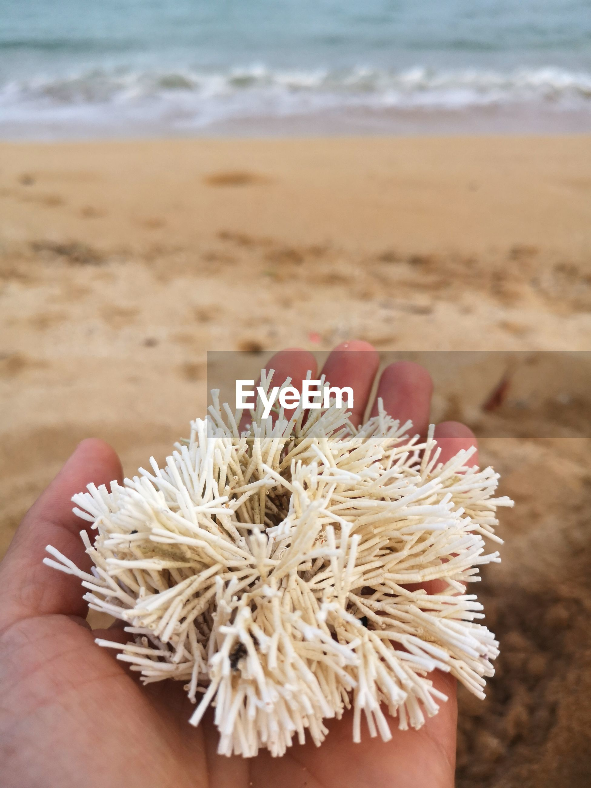 Close-up of hand holding a coral at beach
