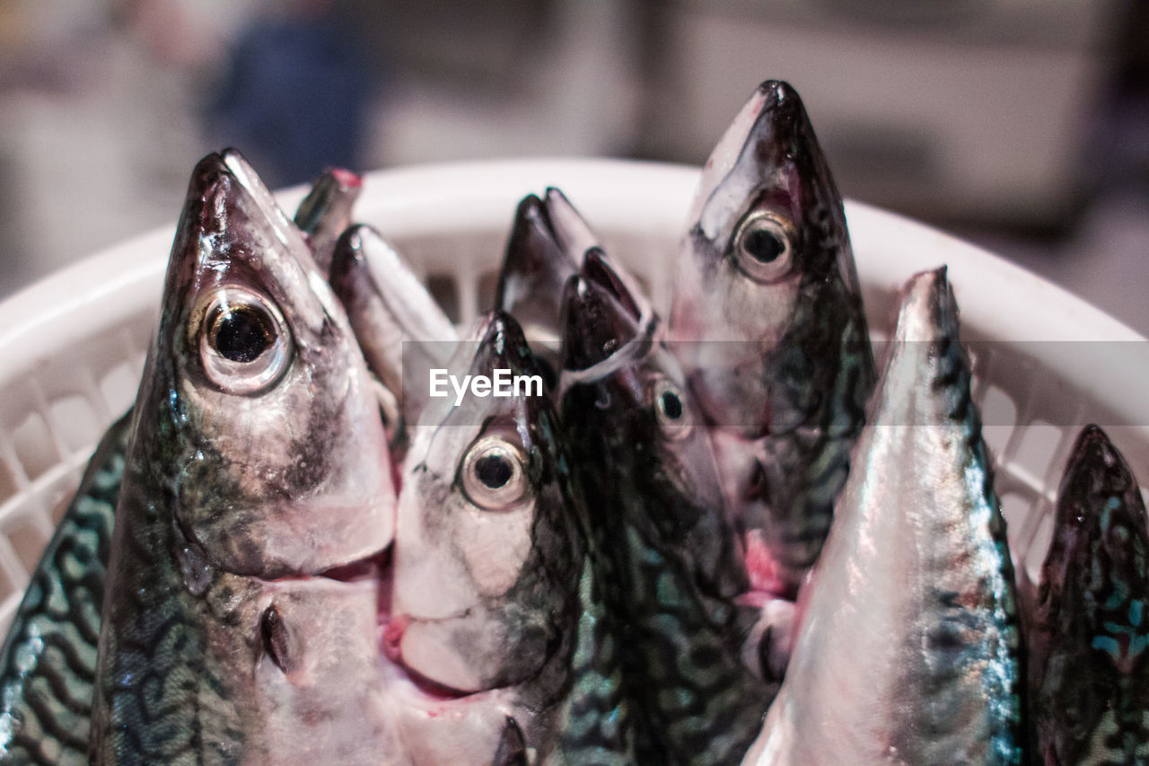 Close-Up Of Fish In Basket