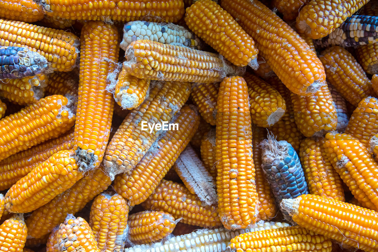 food and drink, food, vegetable, yellow, backgrounds, full frame, freshness, corn, healthy eating, large group of objects, no people, sweetcorn, wellbeing, close-up, corn on the cob, day, outdoors, for sale, abundance, still life