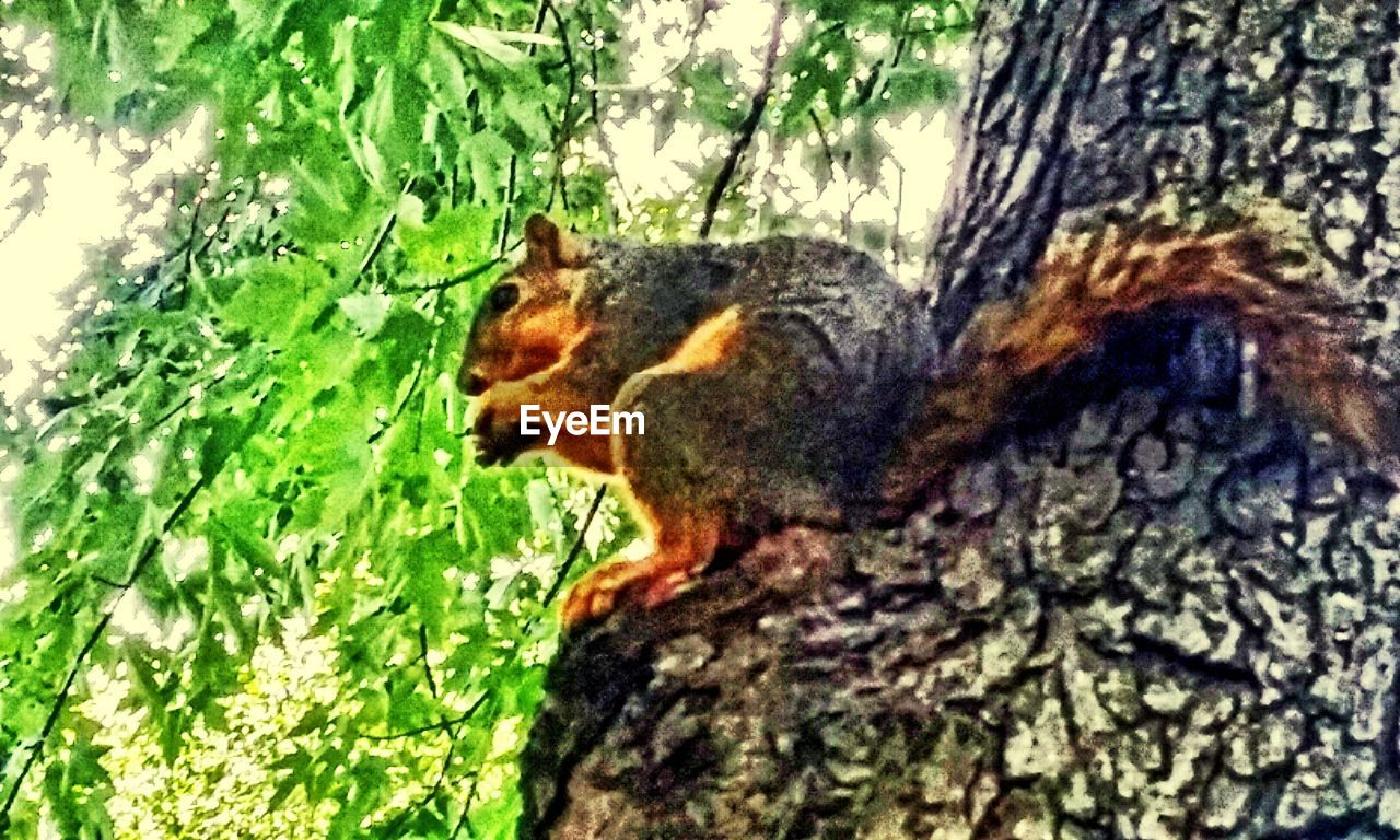 one animal, animal themes, tree trunk, tree, no people, squirrel, nature, mammal, outdoors, growth, day, pets, close-up