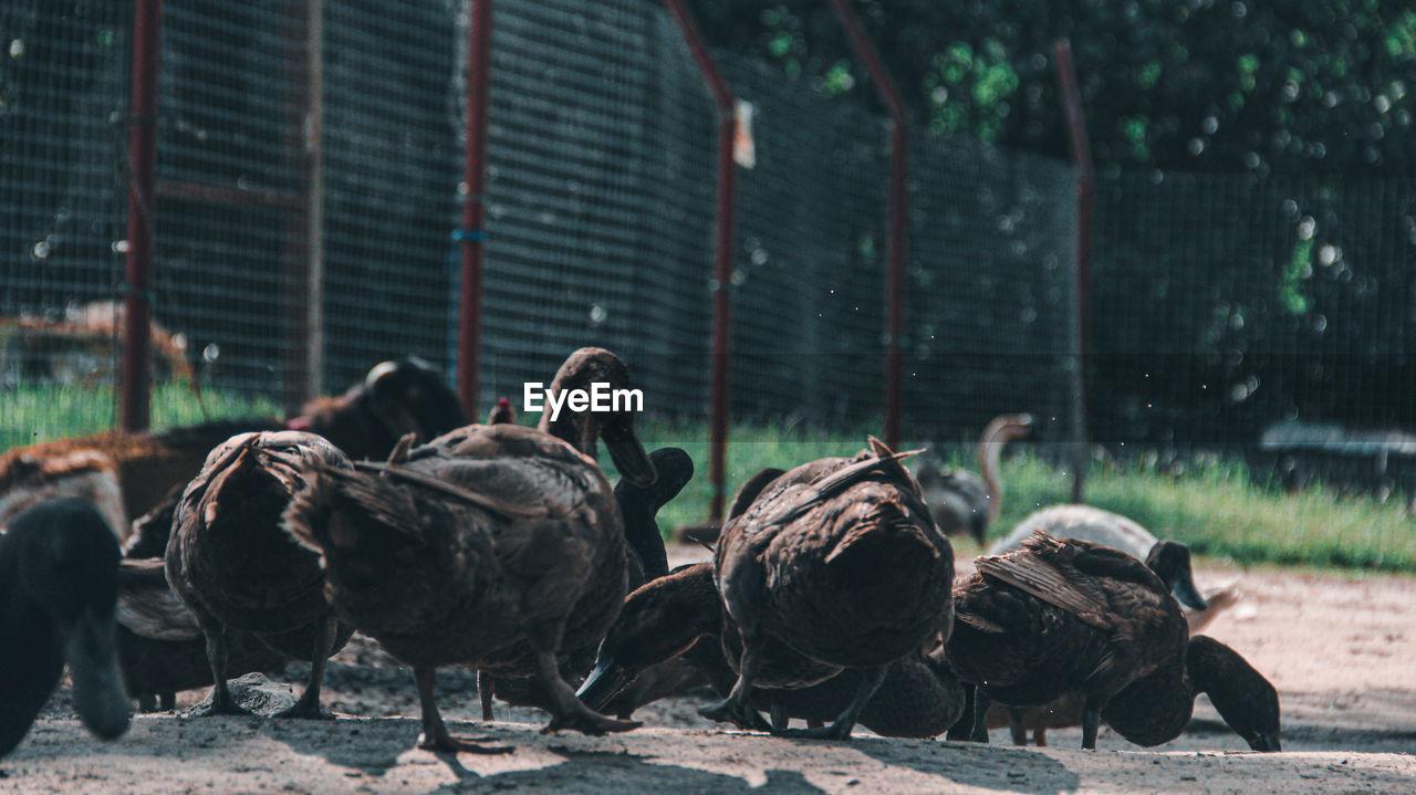 FLOCK OF BIRDS IN A ZOO