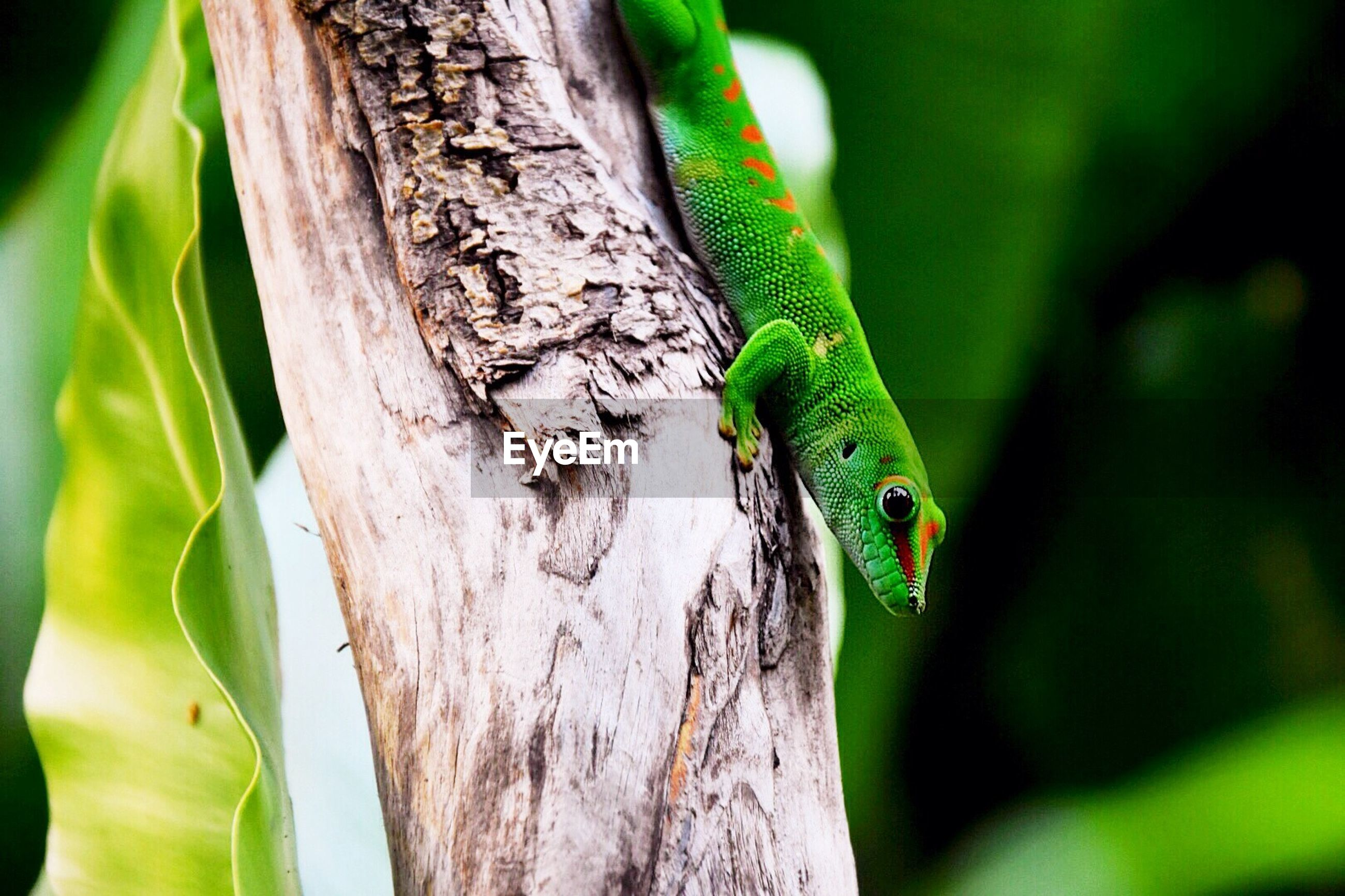 animal themes, one animal, animals in the wild, wildlife, lizard, green color, focus on foreground, close-up, reptile, tree trunk, selective focus, nature, tree, branch, animal head, side view, outdoors, green, zoology, leaf
