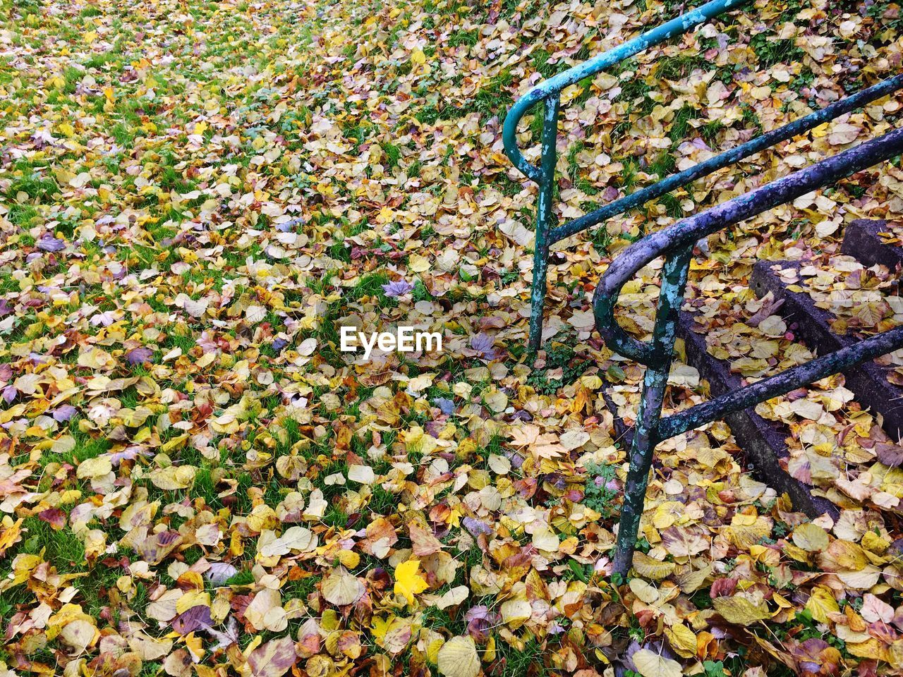 High angle view of autumn leaves on field at park