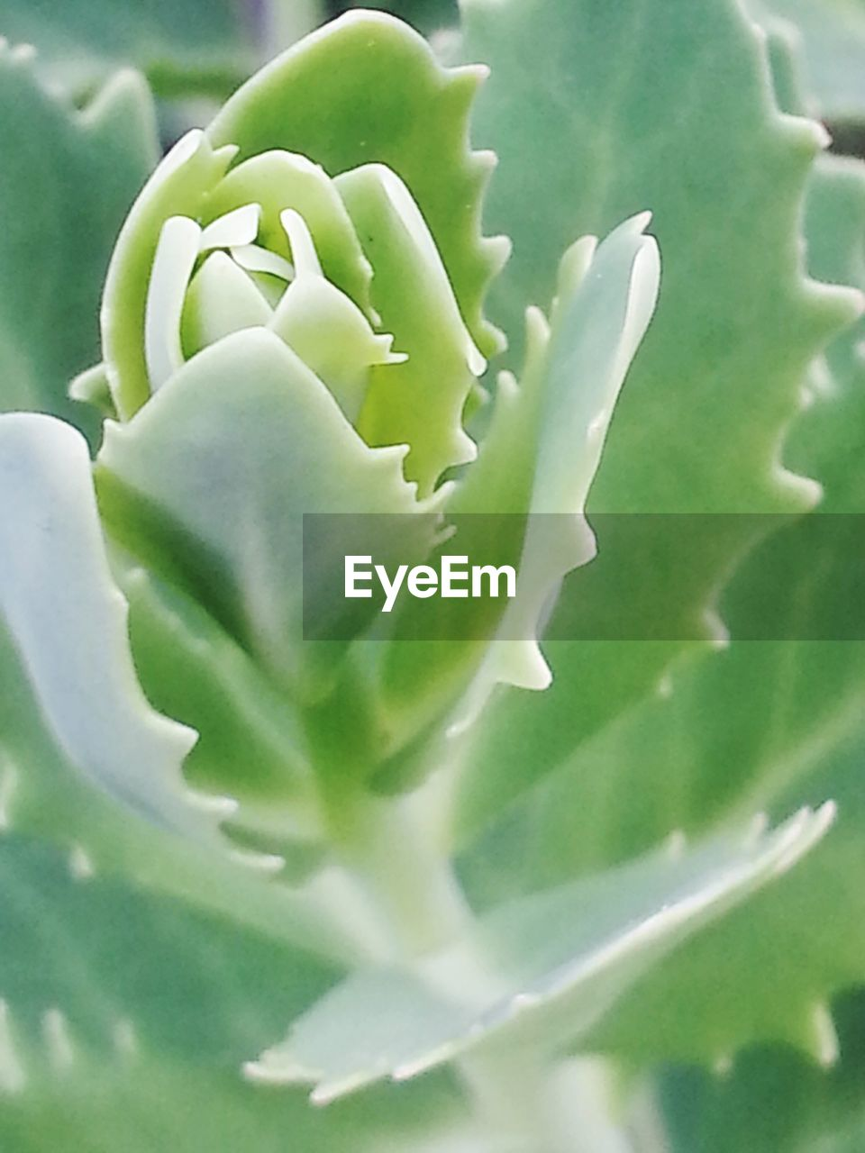 green color, growth, plant, nature, no people, cactus, close-up, day, beauty in nature, outdoors, freshness