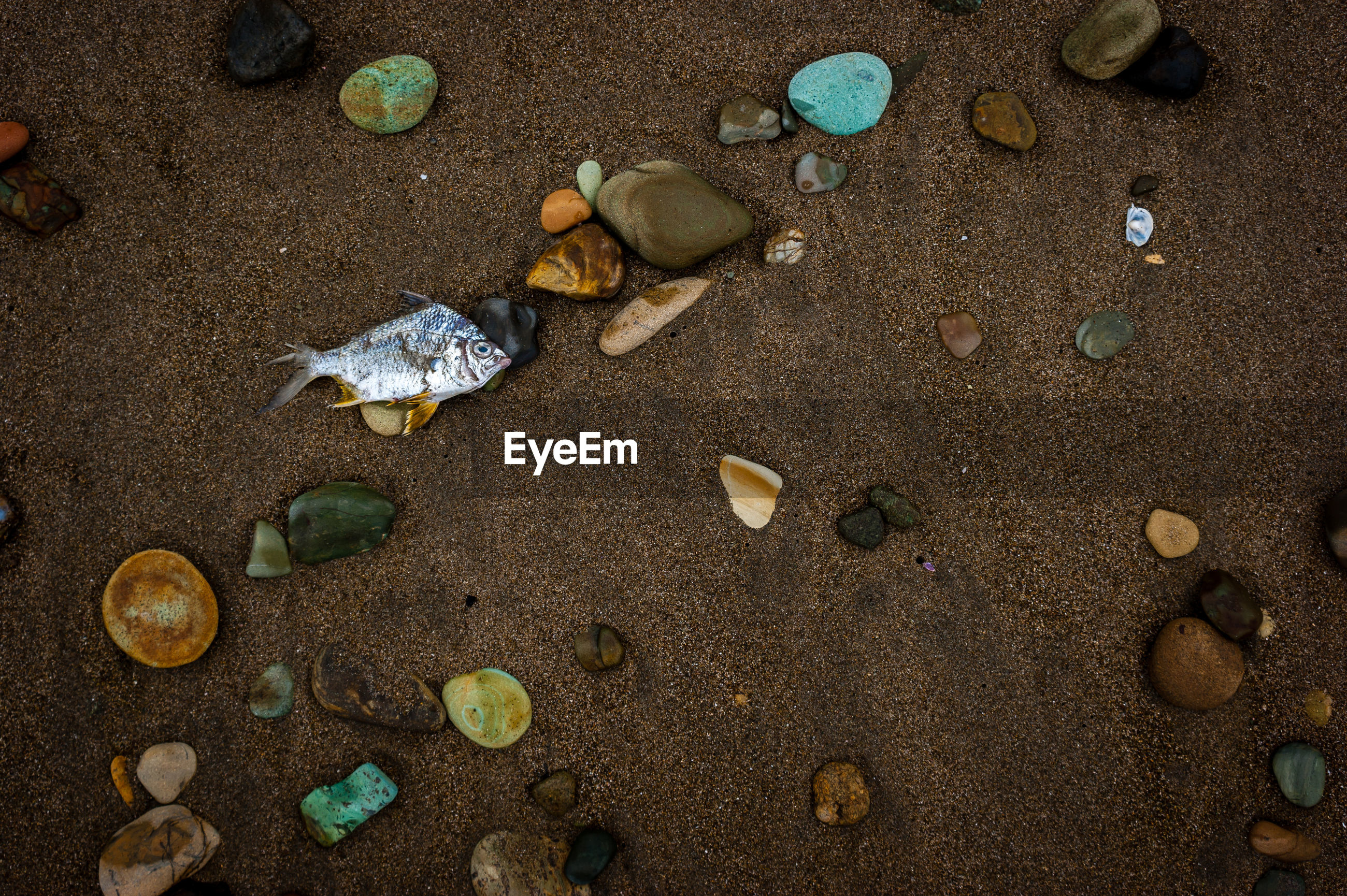 Directly above shot of dead fish on sand at beach