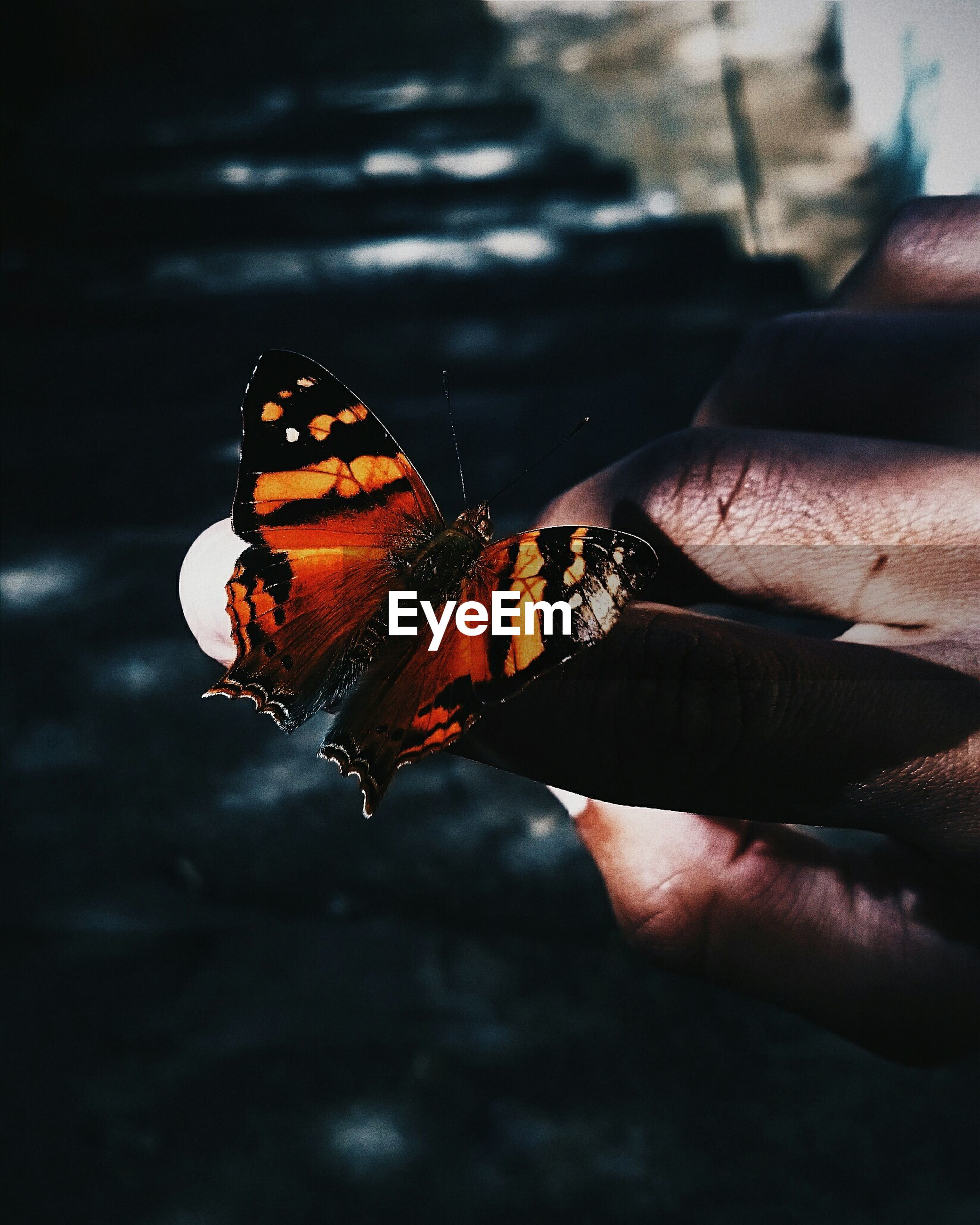 Cropped image of hand holding butterfly