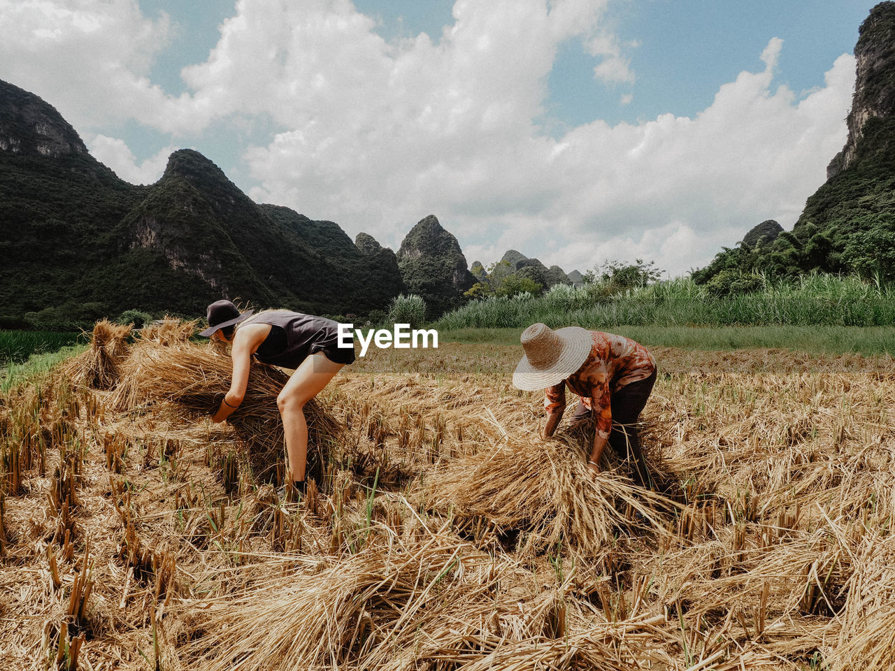 Female Farmers Working On Field During Sunny Day