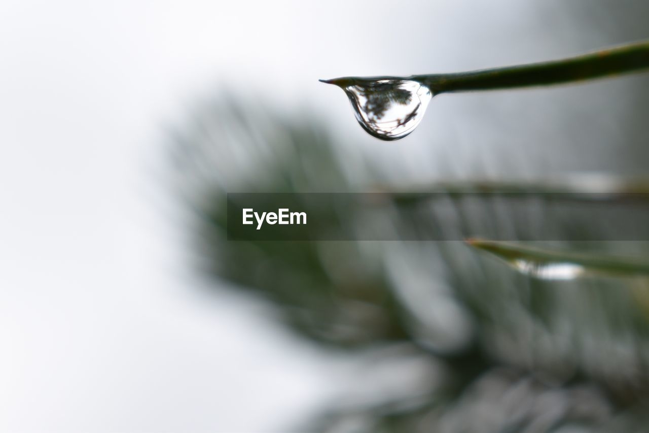 drop, water, close-up, selective focus, no people, nature, plant, focus on foreground, wet, beauty in nature, purity, day, outdoors, fragility, growth, vulnerability, motion, freshness, dew, raindrop, blade of grass