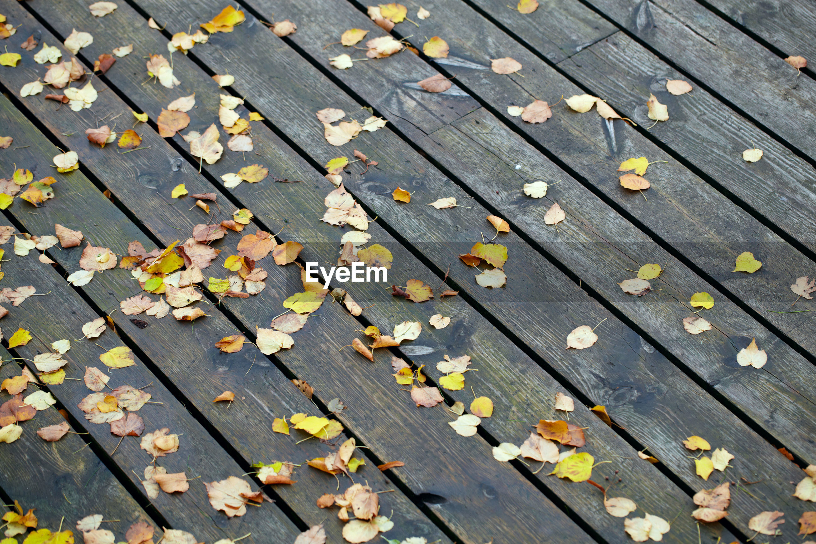 High angle view of leaves on wooden surface