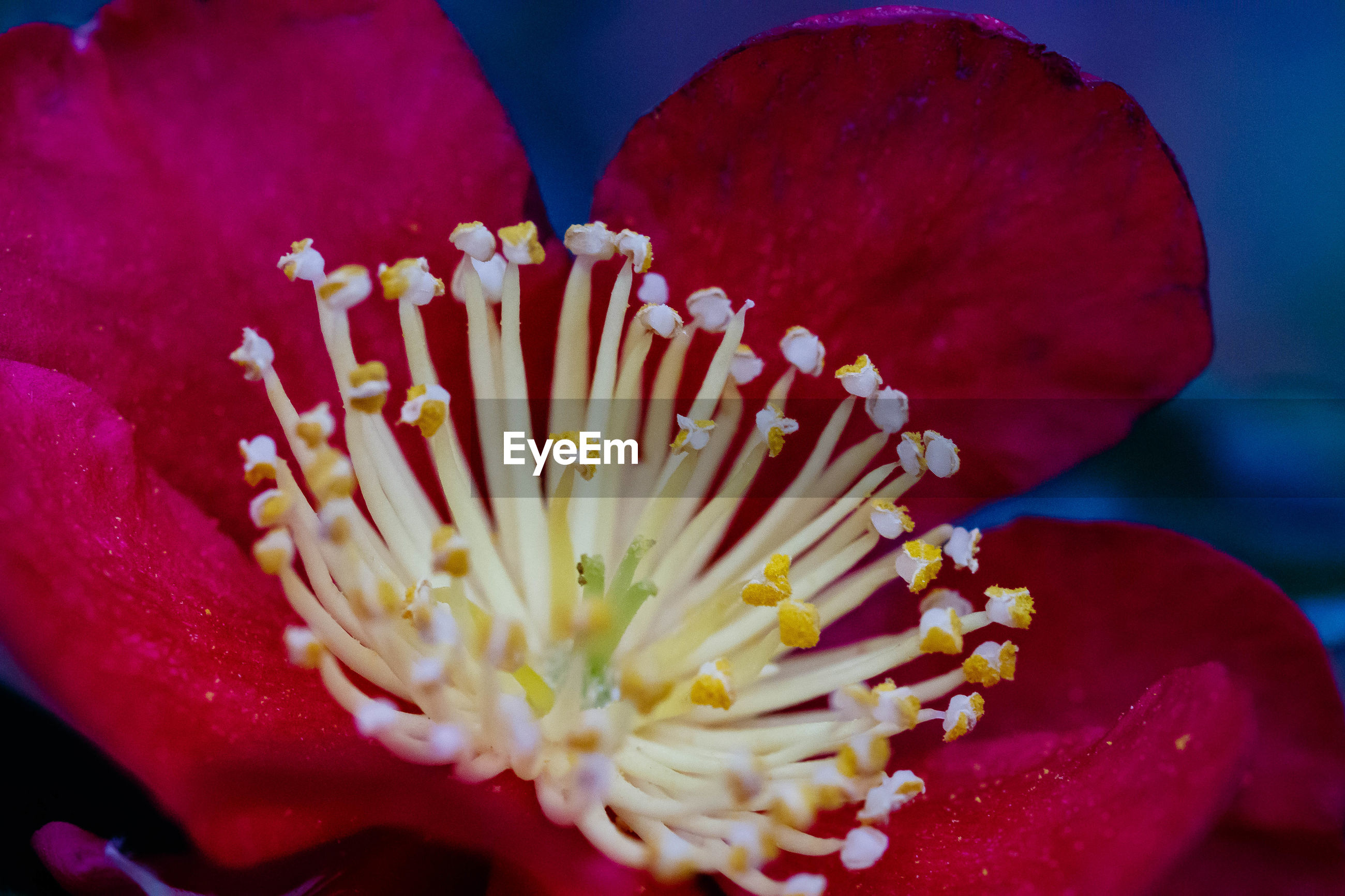 EXTREME CLOSE-UP OF RED FLOWER