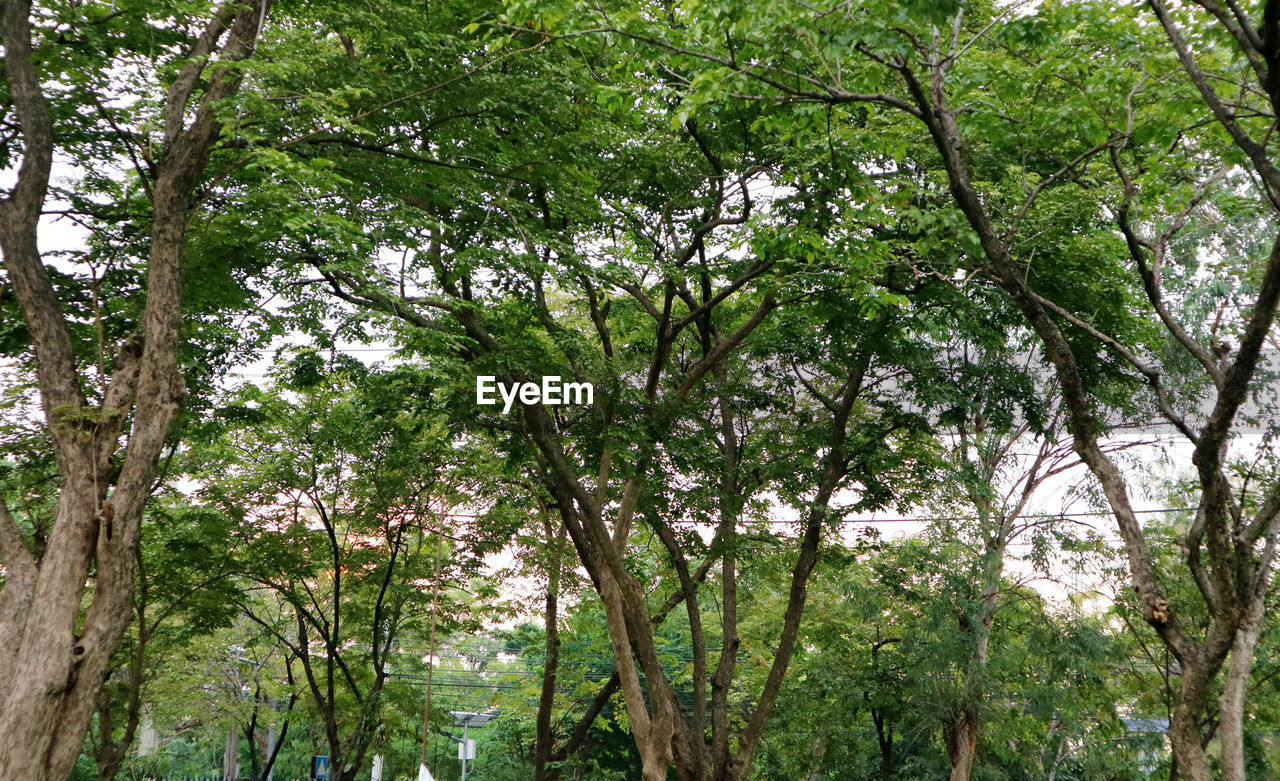 tree, plant, growth, beauty in nature, forest, tranquility, day, nature, land, green color, branch, environment, outdoors, no people, foliage, lush foliage, tree trunk, trunk, scenics - nature, low angle view, rainforest