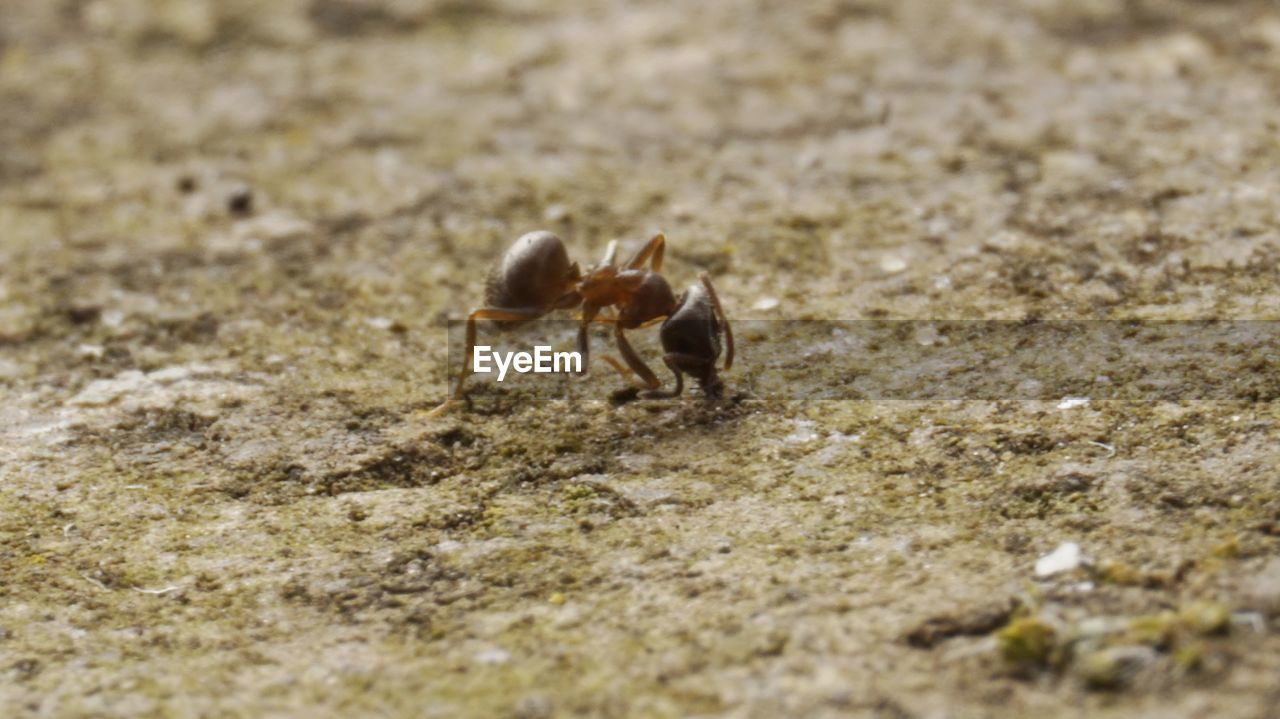 animal themes, one animal, hermit crab, animals in the wild, sand, day, selective focus, nature, animal wildlife, outdoors, no people, close-up, sea life