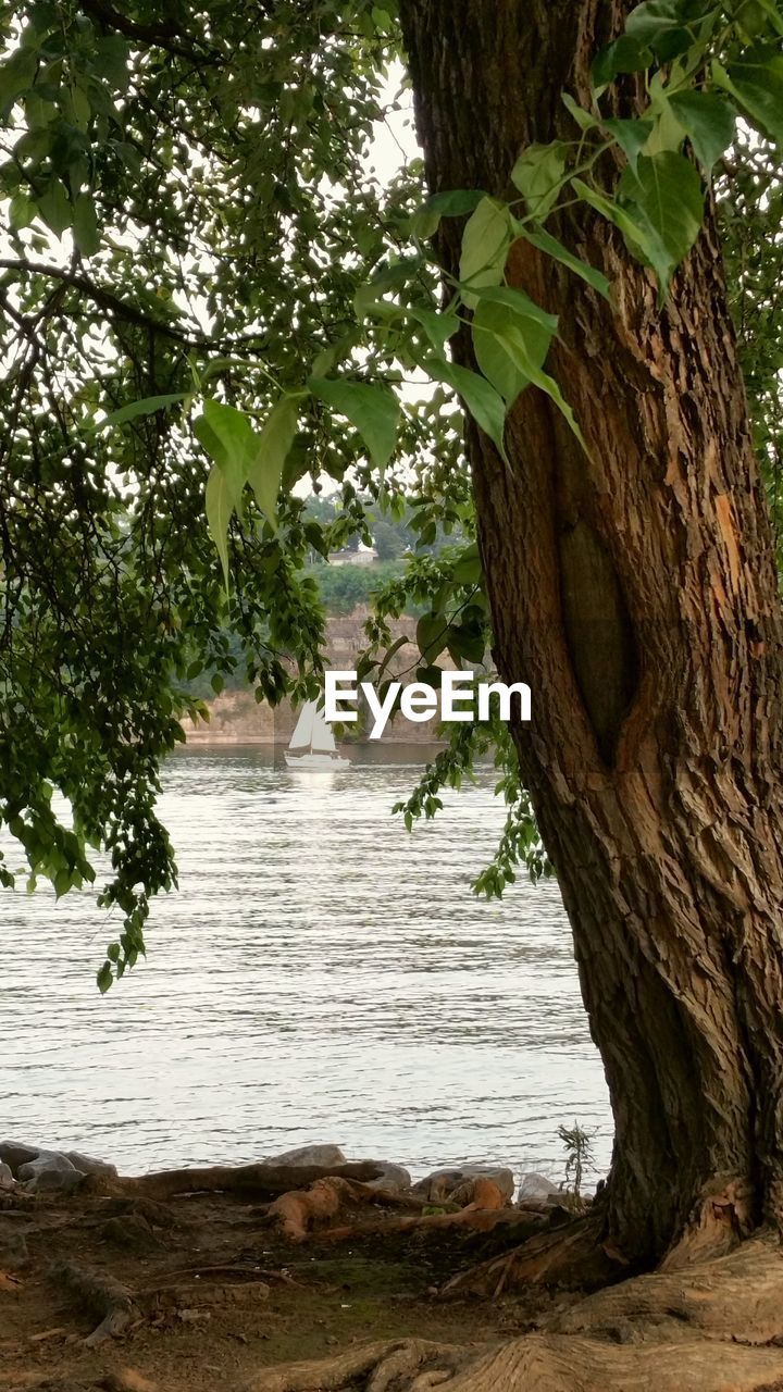 tree, water, tree trunk, nature, growth, no people, day, beauty in nature, outdoors, scenics, branch