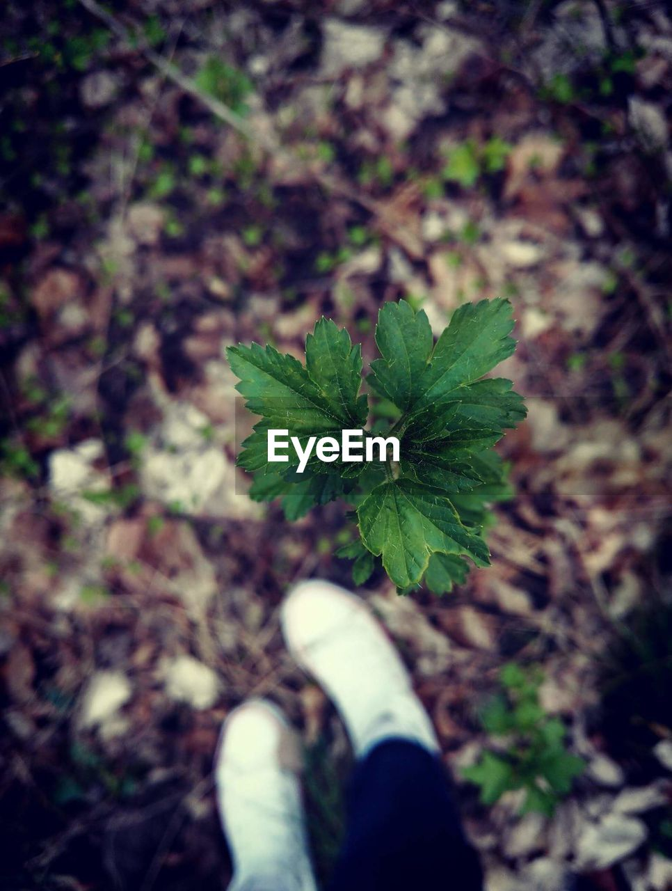 leaf, human body part, plant, growth, one person, personal perspective, green color, nature, real people, human hand, focus on foreground, outdoors, low section, fragility, close-up, day, beauty in nature, freshness, people