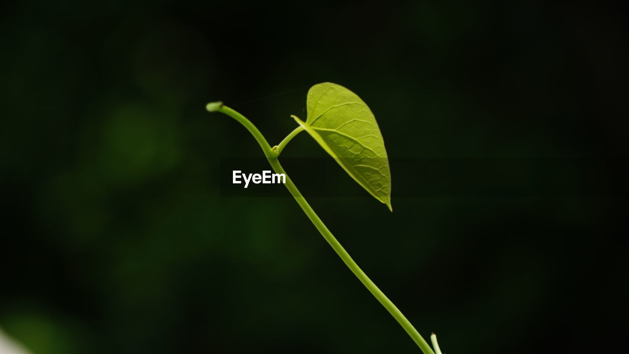 leaf, green color, plant, growth, nature, close-up, no people, fragility, beauty in nature, outdoors, freshness, day