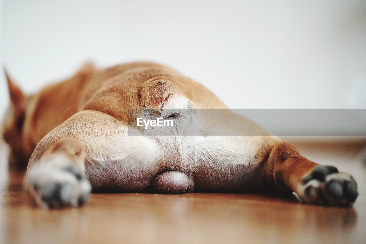 mammal, domestic, pets, domestic animals, animal themes, one animal, relaxation, animal, indoors, vertebrate, no people, sleeping, selective focus, dog, canine, lying down, resting, cat, feline, domestic cat, animal leg, whisker