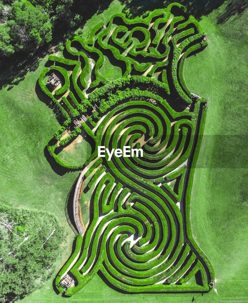 HIGH ANGLE VIEW OF GREEN PLANTS GROWING IN GARDEN